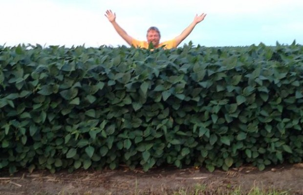 How High Are Your Soybeans?