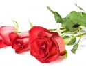 three red roses over a white background